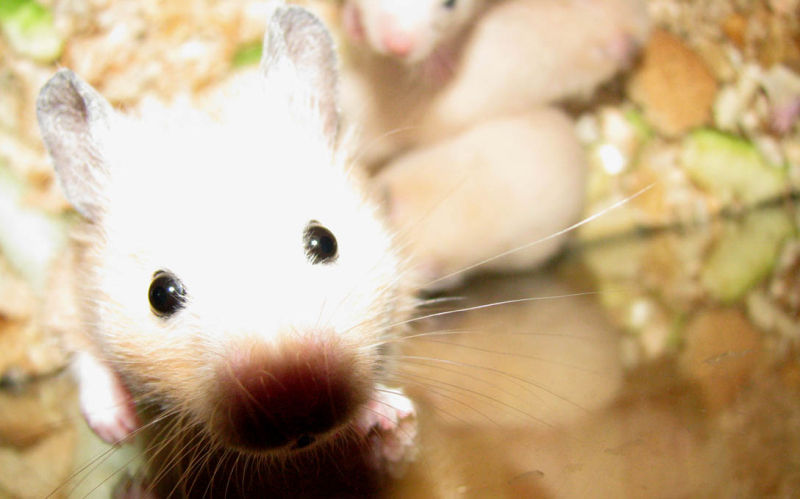Hamster 1