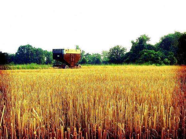 shredded wheat...
