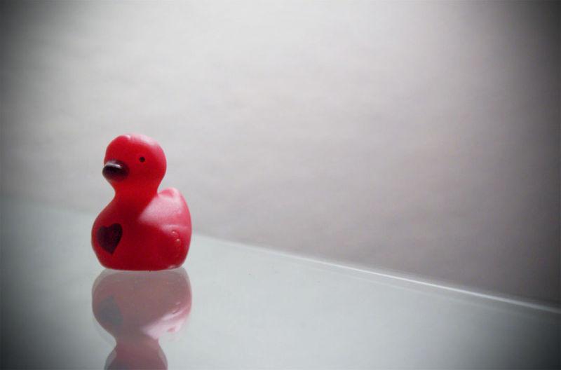 <3 duck