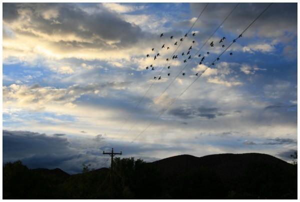Olio Caliente, New-Mexico