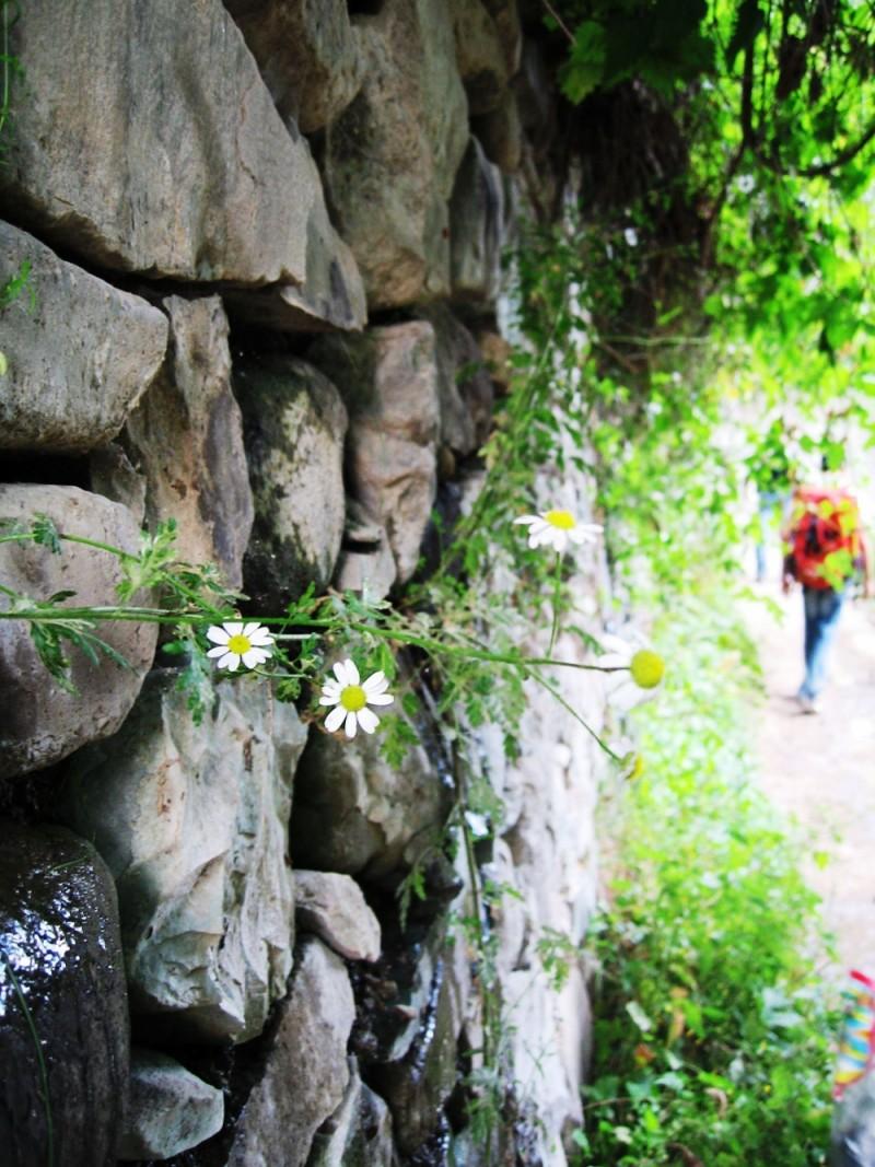 flower dark bright stone sayehroshan