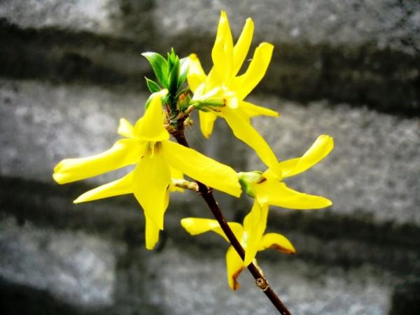 brick flower yellowish shine sayehroshan