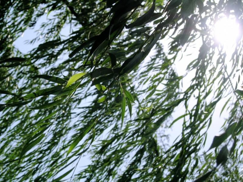wind blowing leaves