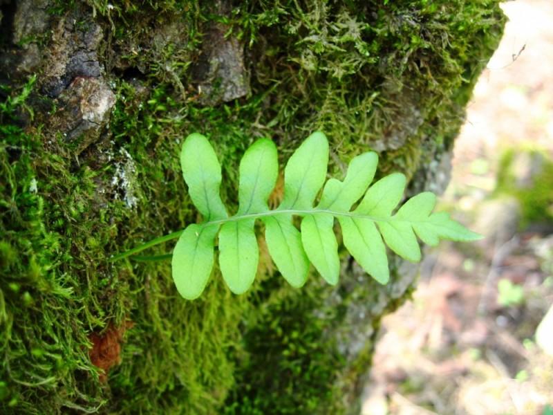 leave tree fresh forrest