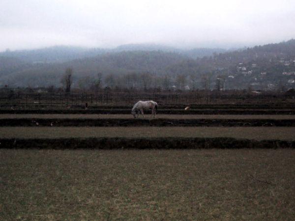 delusion fancy fiction horse