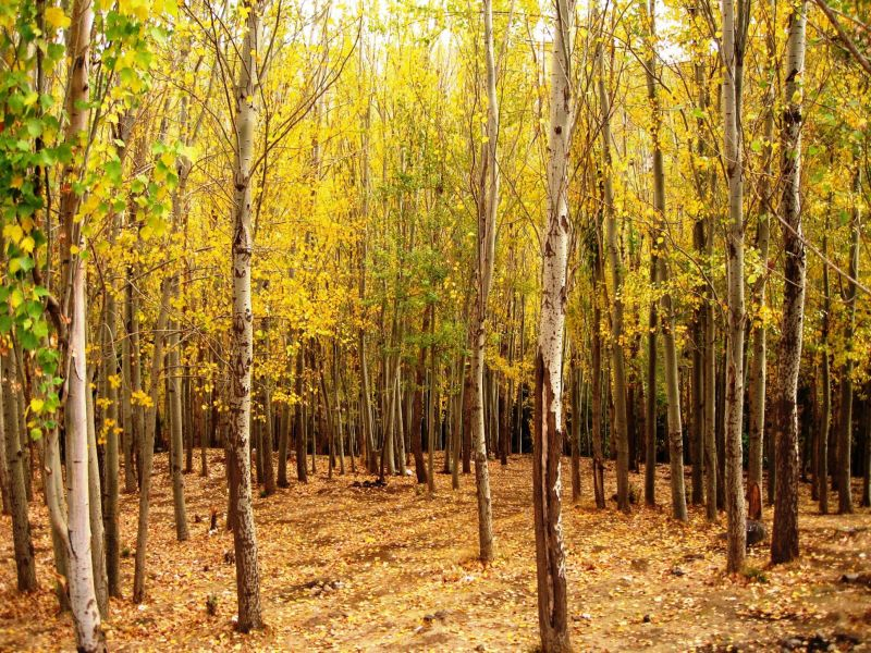 autumn forrest trees