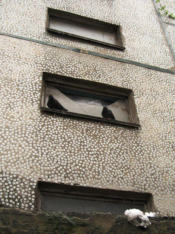 birds window shelter