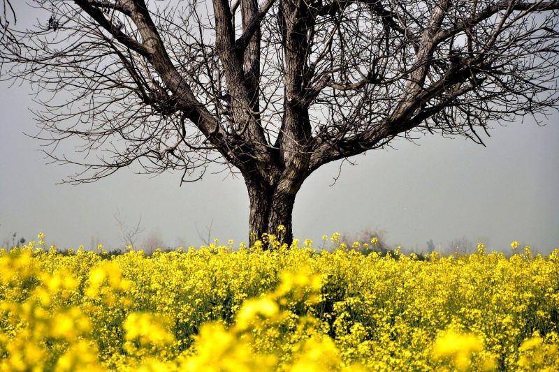 nazim hikmet sun tree flowers