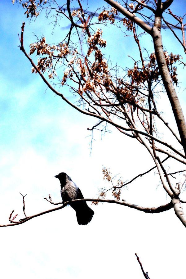 crow poem shamlou