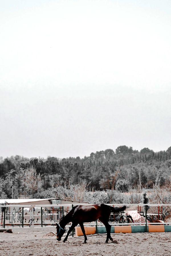 saddle black horse traveller
