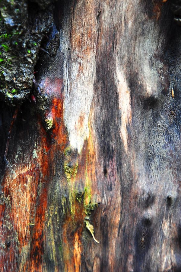 walk skin tree color