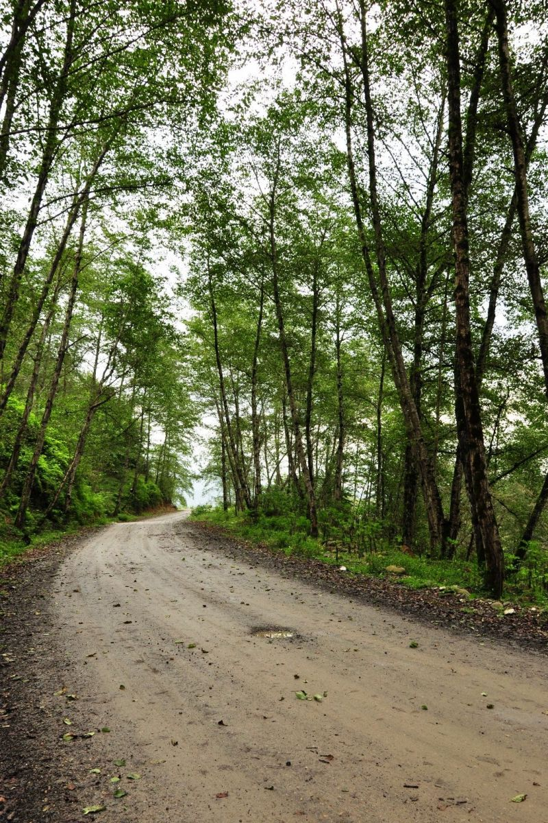 last desire forrest road