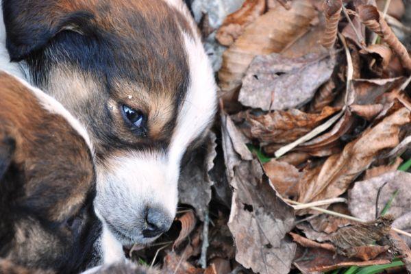 fresh air dog leaves eyes