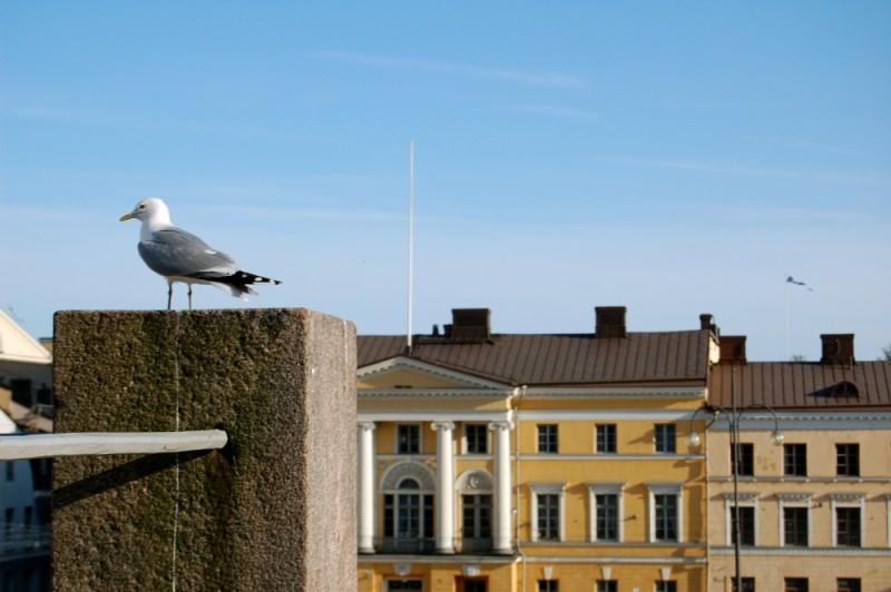 Seagull in Helsinki