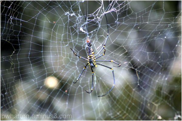 Spider at Perfume Pagoda