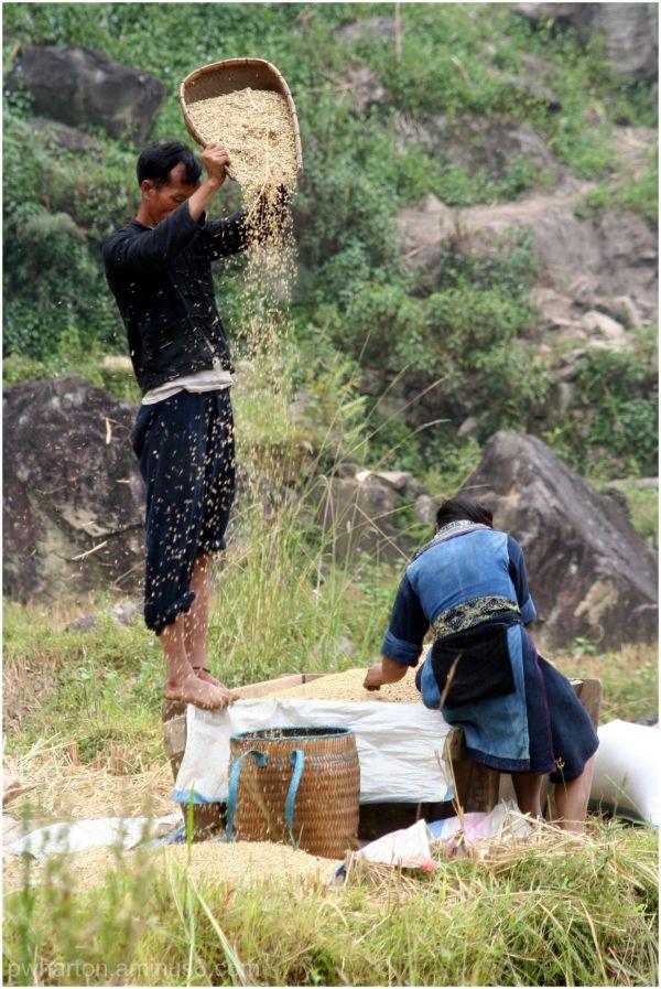 Couple winnowing rice - Vietnam