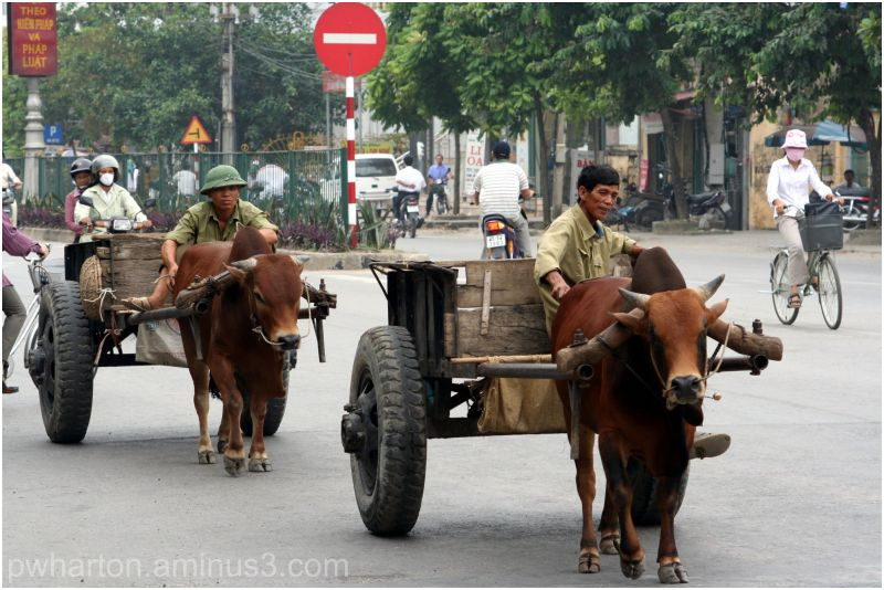 Traditional Transport - Vietnam - Lifestyle & Culture
