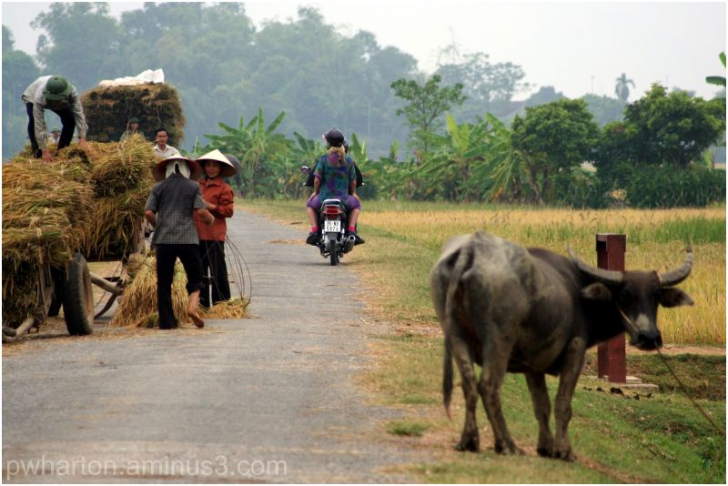 Rural scene Vietnam