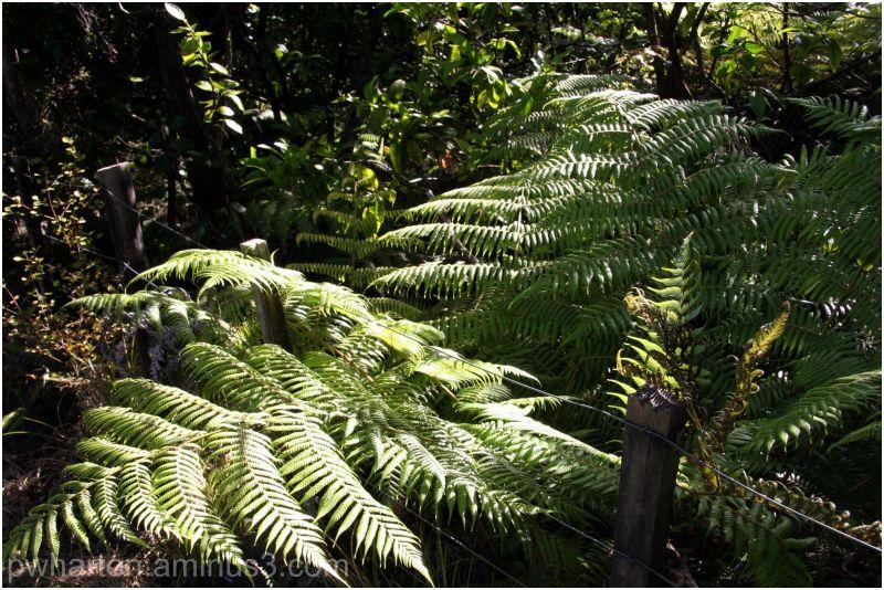 Fern in bush - near Oke Bay