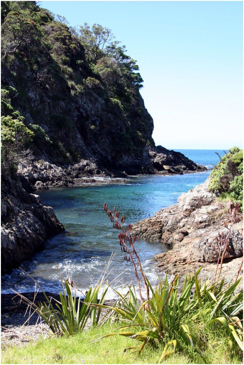 Moturura Island - coastal scenery
