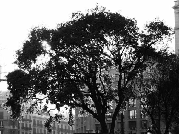 outdoor light day street city tree sun