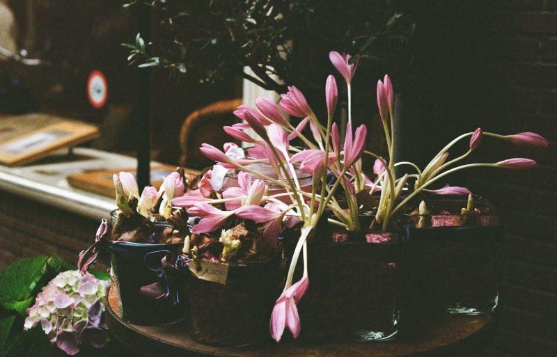 Saffron in the table