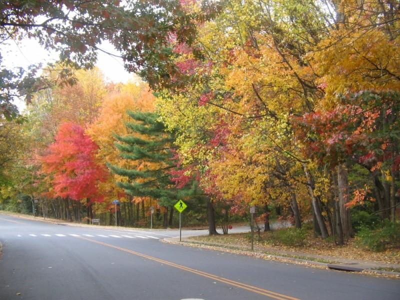 Fall Reston, VA