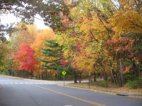 Fall Reston, VA