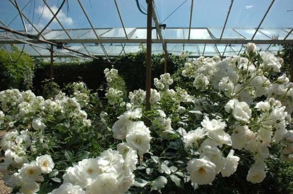 flower housing