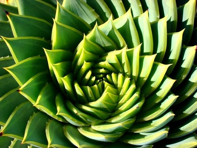 Spiral of Life