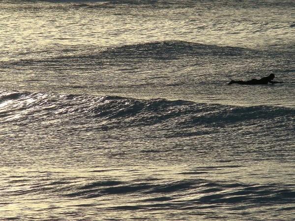 Spot the Surfer!