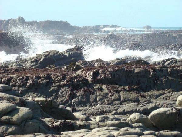 Wild Ocean!