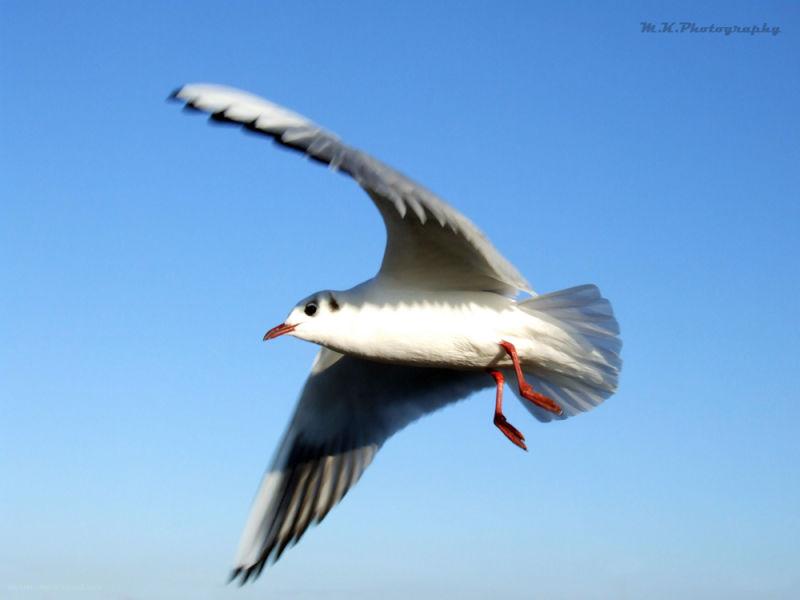 birdsareback2