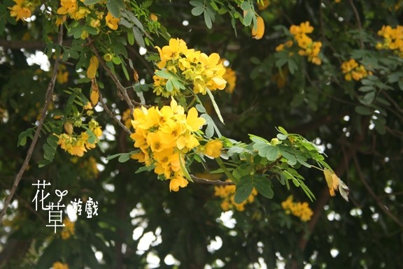 yellow flowers on the tree
