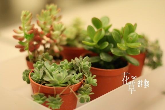 small plants in hk