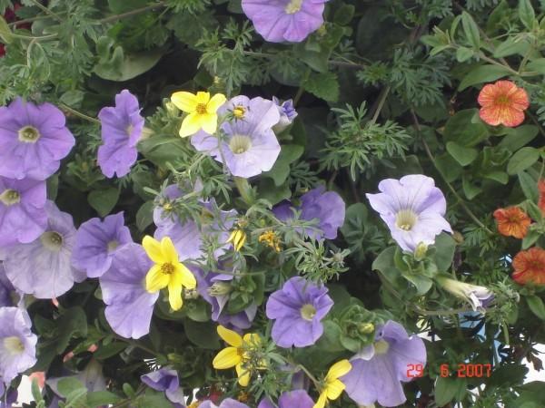Basket Bloom