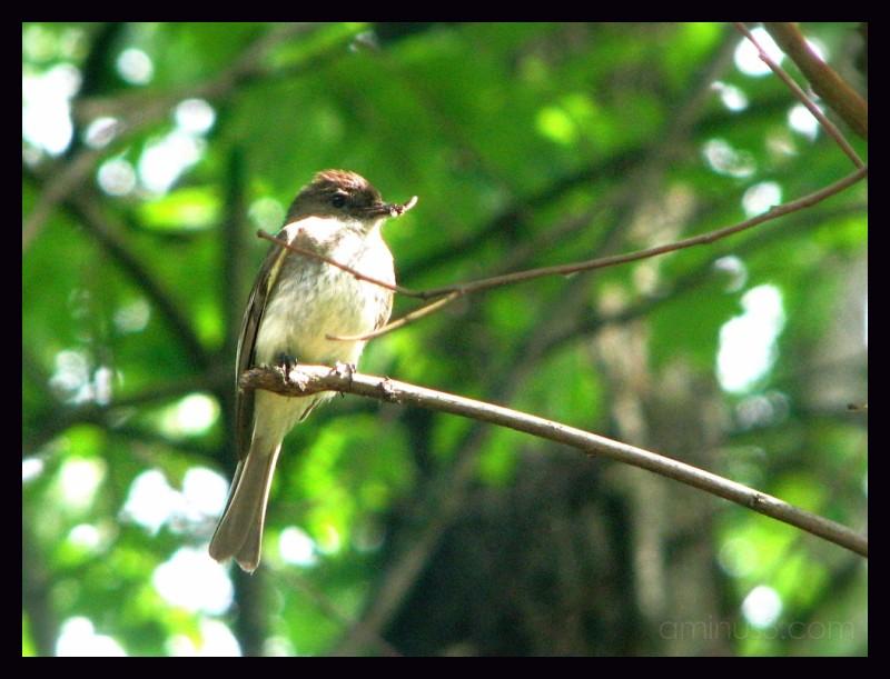 Camping bird