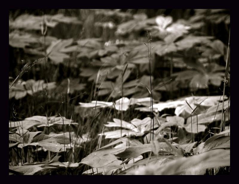 Black & White blanket of leaves