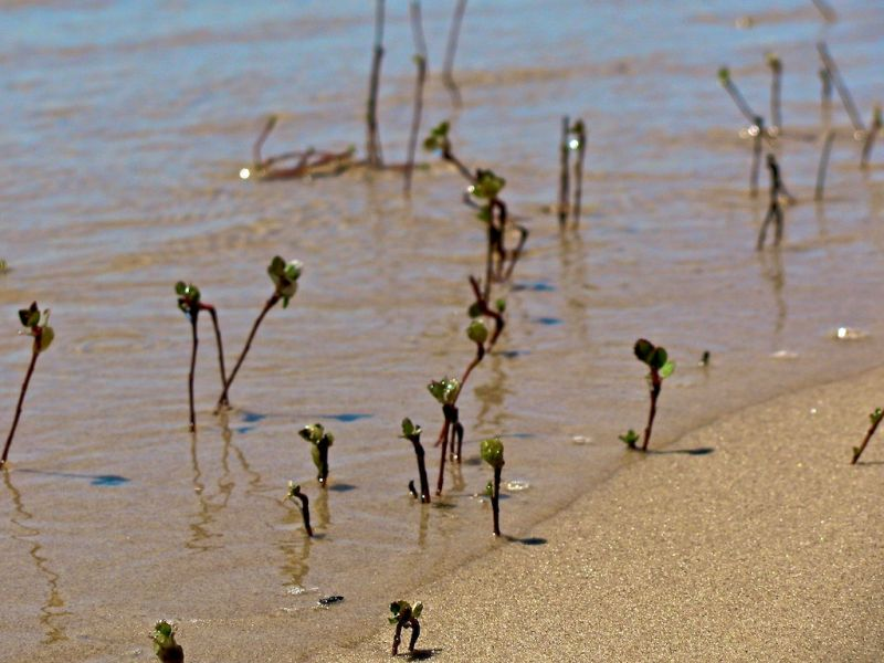 plants in the sand