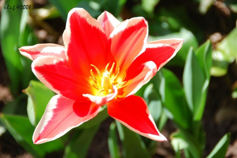 spring bliss...