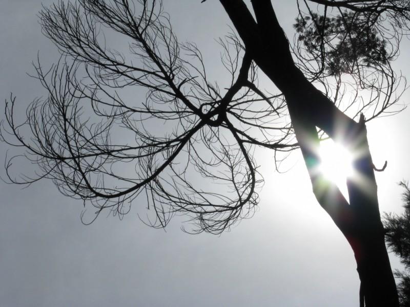 Sun shining thru tree