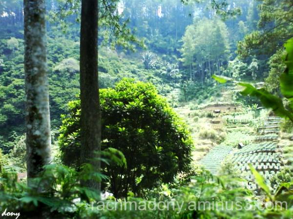Lembang's view