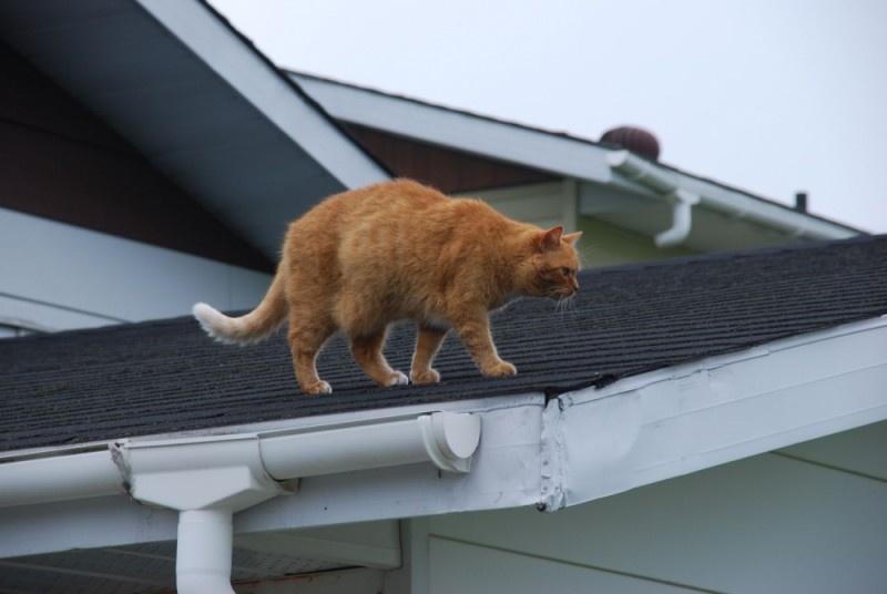 Ginger stalks
