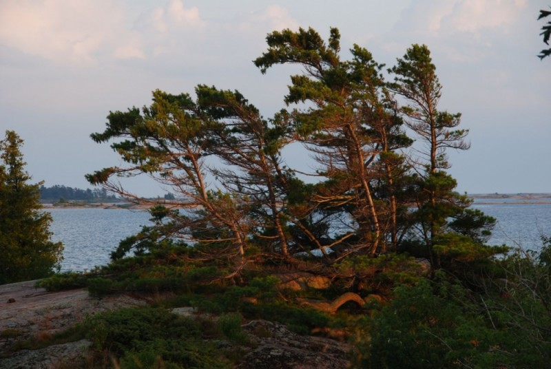 Georgian Bay Pines