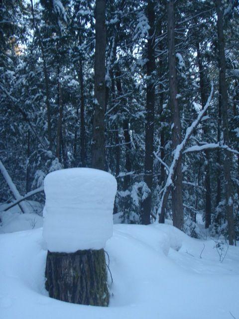 snowcapped stump