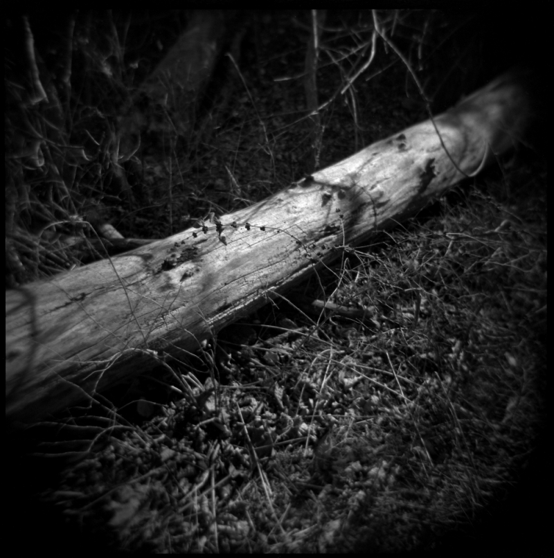 hoga photo of dead tree trunk, b&w