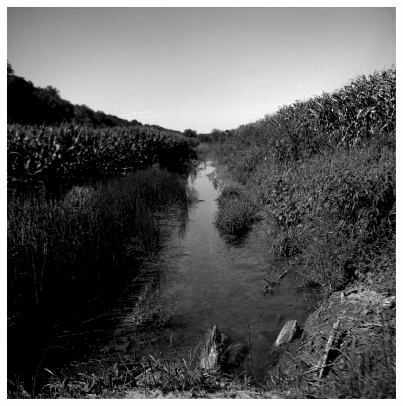 ditch and corn - b&w rolleiflex photo