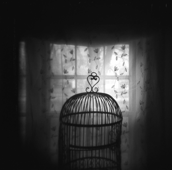 holga photo of a birdcage in a window