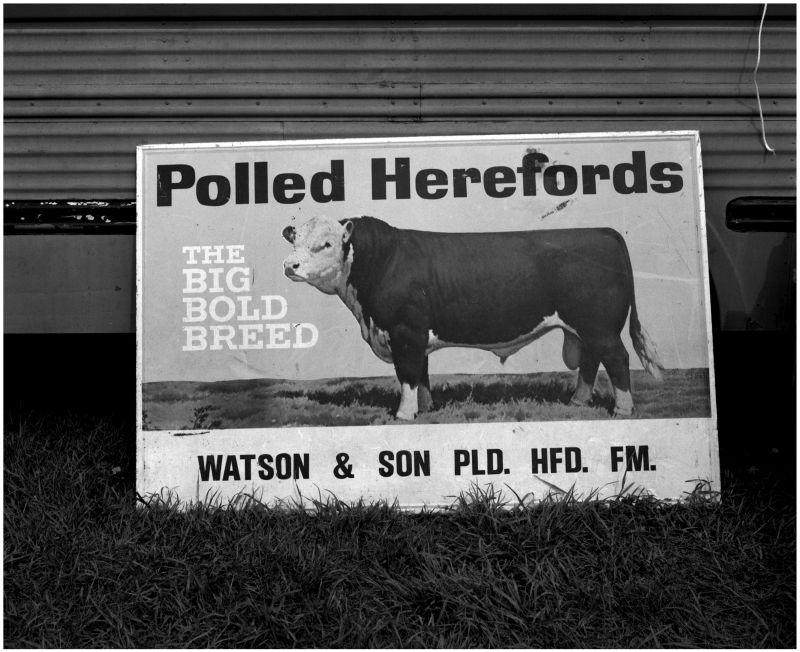 hereford sign, sparks kansas flea market, antique