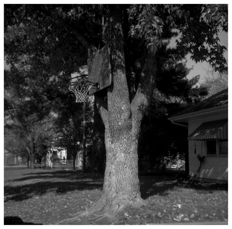 basketball goal on a tree - rocheport, missouri